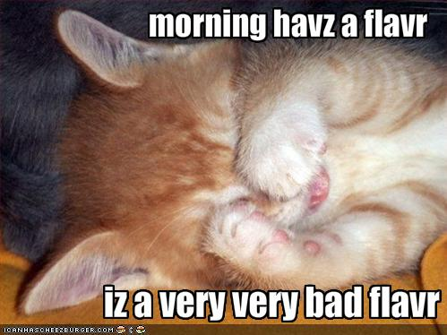 Lolcat showing a kitten covering its eyes with its paws. The caption reads 'morning havz a flavr. Iz a very very bad flavr.'
